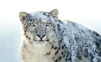 apple snow leopard 200x124 - Snow Leopard et les failles de sécurité Flash