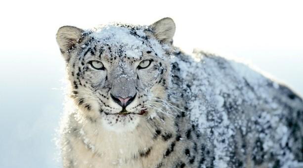 Snow Leopard et les failles de sécurité Flash